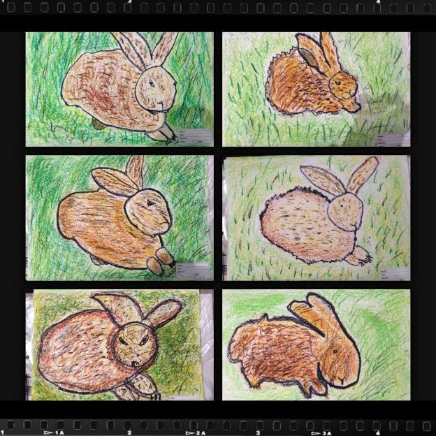 Durer's Rabbit, Student final artwork on A3 paper, using oil pastels