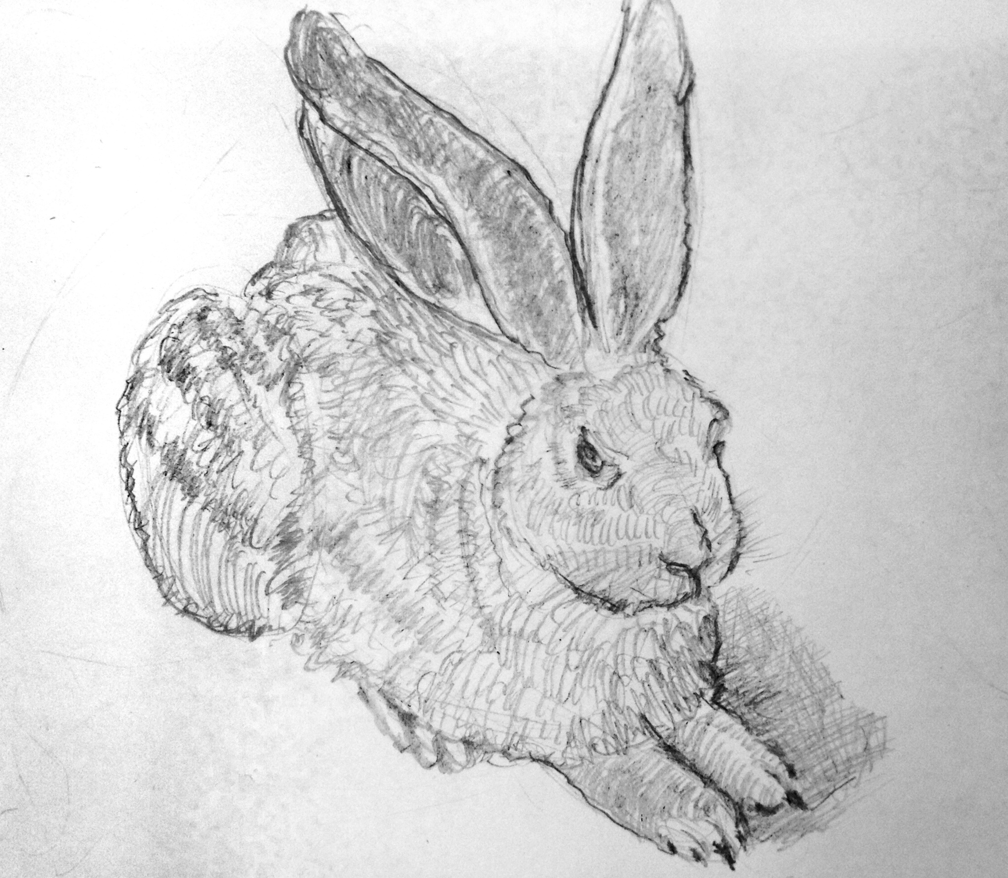 Famous animal drawings photo4