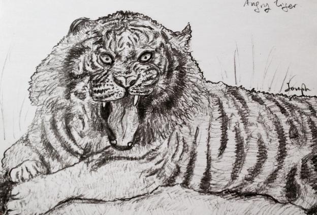 Animal Gesture Drawing : Tiger