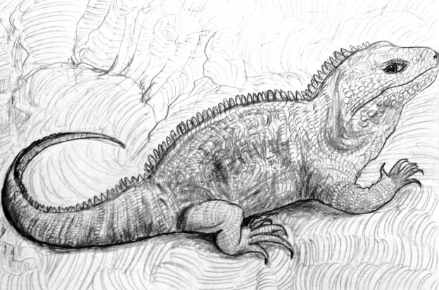 Animal Gesture Drawing: Blue Cayman Iguana